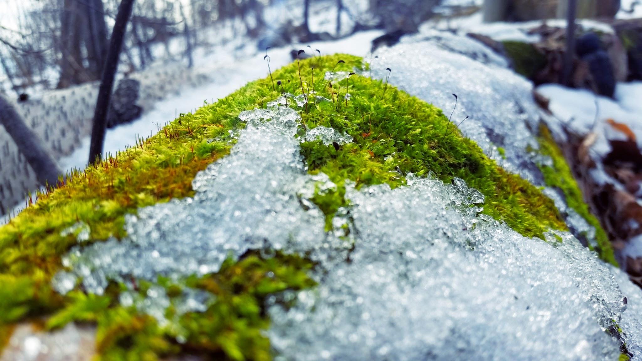 moss meets snow